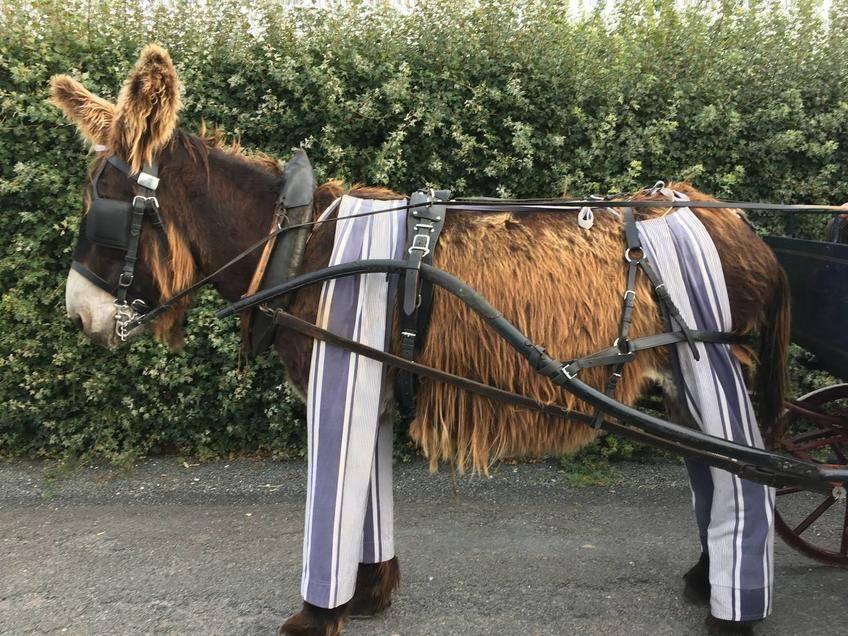 Les ânes culottés de Saint-Martin-de-Ré